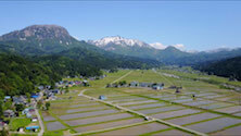 Popular sake brands
