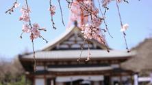 The sake brewing process