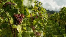 How wine fermentation works