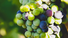 A guide to wine tannins